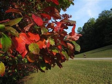 The trees are beginning to change color on Saturday, Sept. 29, 2012, on Natchez Trace Parkway in Williamson County, Tenn. The fall foliage season is expected to be colorful  in much of the Southeast. (AP Photo/Teresa Wasson) By Teresa Wasson