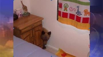 A Sonoita couple who thought their visiting grandchildren were up early instead found a bear cub on a feeding frenzy in their kitchen. By Andrew Michalscheck