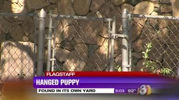 A puppy was found hanging from its own doghouse. By Jennifer Thomas