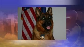 Jake pioneered the K-9 program for the Camp Verde Marshal's Office. By Jennifer Thomas