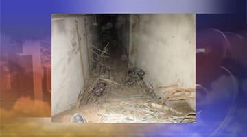 Investigators said two suspects used a hand-dug tunnel to enter into the mine shaft and steal copper. By Jennifer Thomas