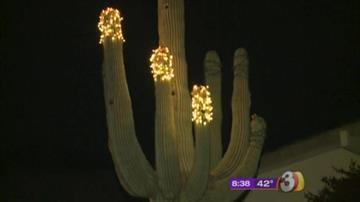 Menorah Cactus By Tami Hoey