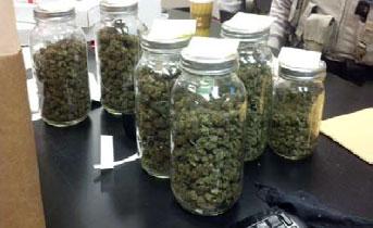 Pinal County authorities said glass jars containing hydroponic marijuana were found in Anthony Lara's vehicle. By Jennifer Thomas
