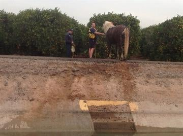 A man, horse and buggy went into a canal at Greenfield and McKellips in east Mesa. By Jennifer Thomas