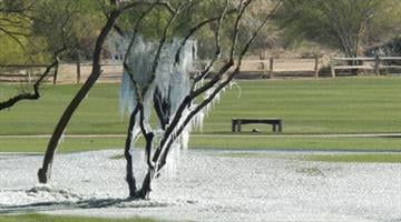 Ice on a tree on the Silverado Golf Course in Scottsdale, Ariz. By Mike Gertzman