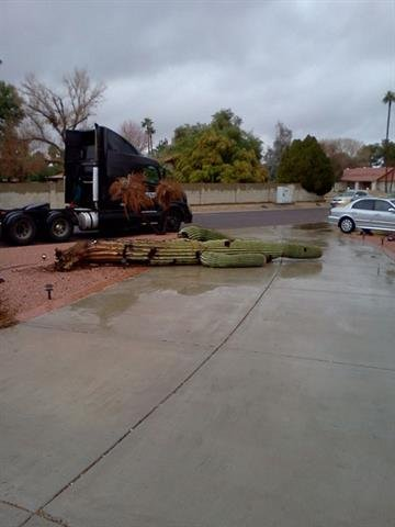 Too much rain for this Saguaro cactus in Peoria, Ariz. By Mike Gertzman