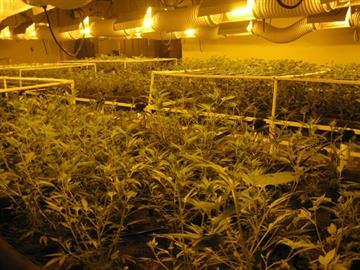 A marijuana grow operation was found in a garage in Golden Valley. By Jennifer Thomas