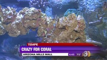 "The ""Crazy for Coral Spring Break Event"" will kick off SEA LIFE Arizona's new coral reef tank that will be home to a variety of coral species and sea creatures. By Content Creator"