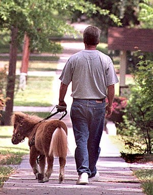 After four weeks of training, Dan and Cuddles venture alone through a quiet neighborhood in Franklinton, NC. TODD SUMLIN-STAFF By TODD SUMLIN