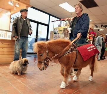 12/14/2002 -- Ellsworth, Maine -- Dan Shaw and his Guide Horse Cuddles make their way through a shopping mall. By H. DARR BEISER