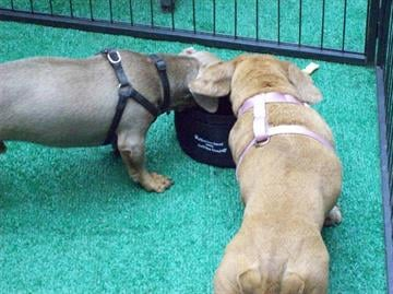 It was all about animals at the University of Phoenix Stadium Saturday for The Phoenix Pet Expo, and hundreds of exhibitors were there to provide information and resources for pet owners. By Content Creator