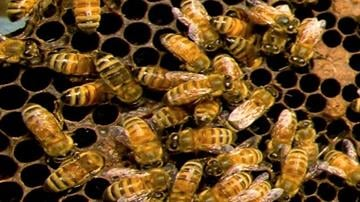 File photo of bees By Catherine Holland