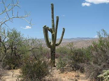 The Douglas Springs Trail in the Rincon District of Saguaro National Park was hit with graffiti. By Jennifer Thomas