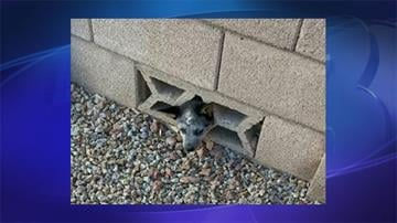 Puppy stuck in block wall fence By Jennifer Thomas