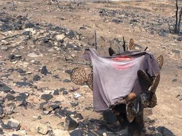 Granite Mountain T-Shirt on burnt cactus; visitors asked to touch T-shirt on way to deployment site By Catherine Holland