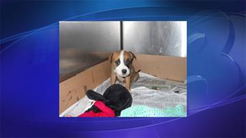 Puppy abandoned at shelter doorstep By Jennifer Thomas