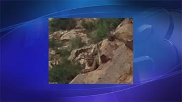 Nick Nasca and his girlfriend encountered a mountain lion in Catalina State Park By Jennifer Thomas