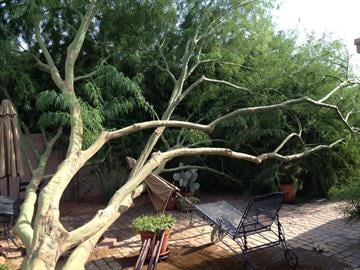Strong winds blew down a palo verde tree in an Avondale backyard. By Jennifer Thomas