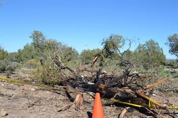 The area where the plane likely hit trees By Jennifer Thomas