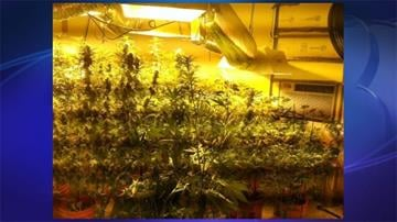 Goodyear police said 113 marijuana plants were found in Kenneth Ruppel's home. By Jennifer Thomas