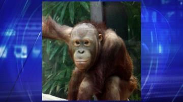 Daniel in his habitat at the Cleveland Metroparks Zoo By Jennifer Thomas