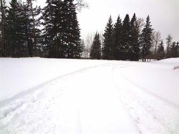Snow blankets the road to Arizona Snowbowl By Christina O'Haver