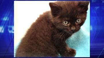 Lucky was thrown from a moving vehicle when he was 5 weeks old. By Jennifer Thomas