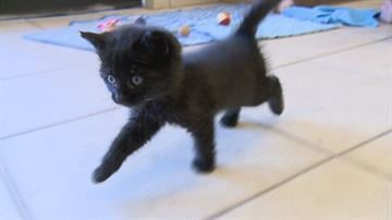 Lucky at 5 weeks old By Jennifer Thomas