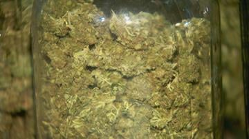 Marijuana found during bust By Jennifer Thomas