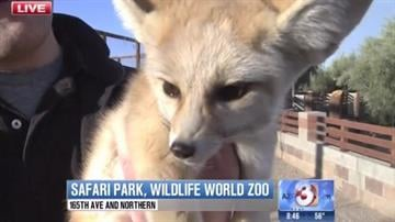 Wildlife World Zoo has a new 15-acre Safari Park. The grand opening will take place Saturday, Jan. 25. And on Wednesday's Good Morning Arizona, 3TV's April Warnecke got a preview of what the new attraction has to offer. By Tami Hoey