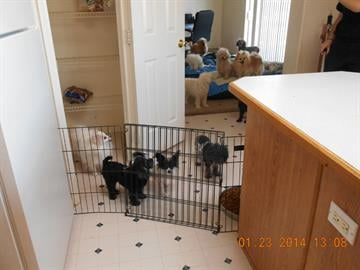 Dogs rescued from home near Eloy By Jennifer Thomas