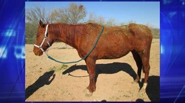 Sheriff's detectives seized four horses and arrested the owner on animal cruelty charges. By Jennifer Thomas