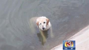 A 10-year-old dog is recovering at the Arizona Humane Society's Second Chance Animal Hospital after he was rescued from a Phoenix canal Friday morning. By Mike Gertzman