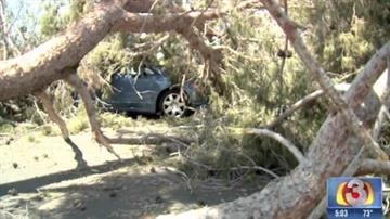 Tree on top of car in west Phoenix By Christina O'Haver
