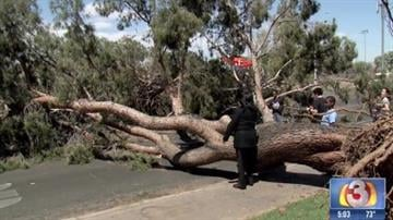 Downed tree in west Phoenix By Christina O'Haver