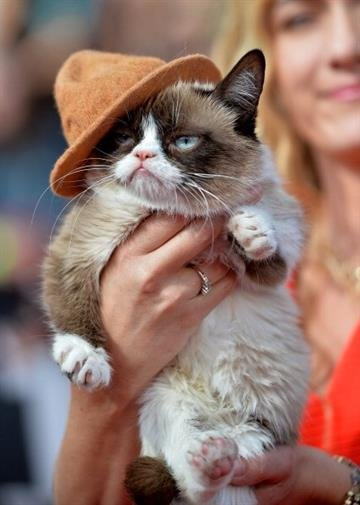 LOS ANGELES, CA - APRIL 13:  Grumpy Cat attends the 2014 MTV Movie Awards at Nokia Theatre L.A. Live on April 13, 2014 in Los Angeles, California.  (Photo by Michael Buckner/Getty Images) By Michael Buckner