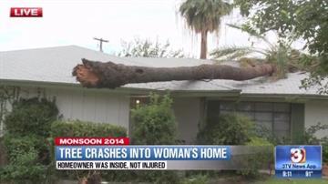 Tree near 44th Street and Thomas Road in Phoenix By Jennifer Thomas