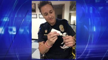 Officer Heather Krimm with one of the kittens By Jennifer Thomas