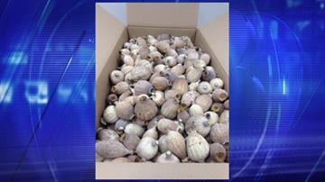 More than 1,500 pounds of poppy pods were seized by CBP personnel at the Port of Phoenix. By Jennifer Thomas