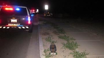 A skateboarder was hit by a vehicle near Gantzel and Chandler Heights roads in San Tan Valley. By Jennifer Thomas