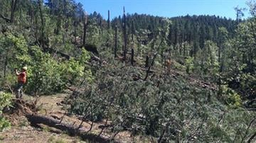 Downed trees and power lines resulting from a severe storm on Sept. 27 have made trails in the area of Groom Creek unsafe and impassable at this time. (Photo courtesy Town of Prescott Valley) By Jennifer Thomas