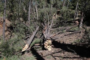 Storms on Sept. 27 damaged houses and trees about six miles southwest of Prescott near Groom Creek. By Jennifer Thomas