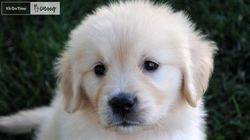 GoDaddy wants the public to names this puppy, its newest star for a Super Bowl ad. By Catherine Holland
