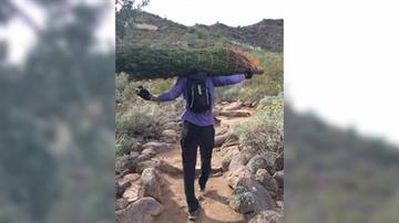 Four members of the Scottsdale Adventure Club -- Mike, Jeff, Tommy, and Steven -- schlepped several full-size Christmas trees up to the top of Camelback Mountain. By Catherine Holland