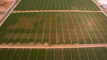 Super Bowl XLIX crop circle with names of AFC and NFC champs By Jennifer Thomas