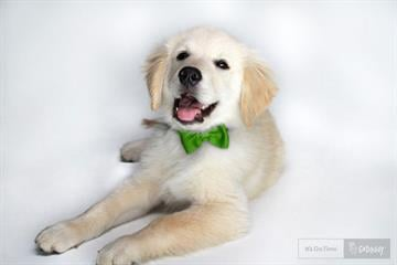 GoDaddy has yanked its Super Bowl ad starring Buddy, a lost puppy that gets sold online. By Jennifer Thomas