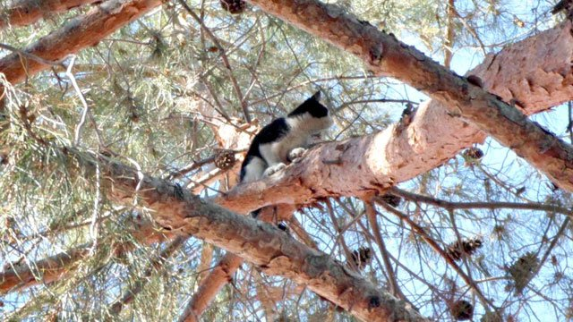 The 4-month-old kitten was stuck high in a tree. (Source: Arizona Humane Society)