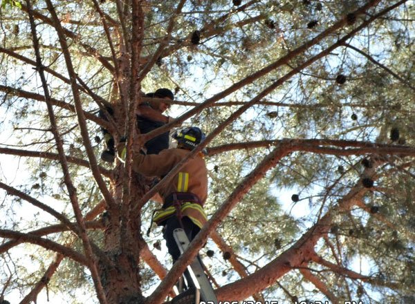 The rescue team had to climb through the tree branches before they could reach the kitten. (Source: Arizona Humane Society)