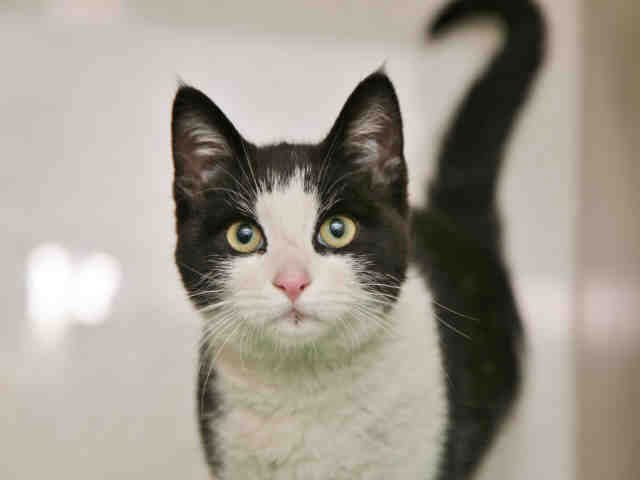 Evergreen is looking for a new home. (Source: Arizona Humane Society)