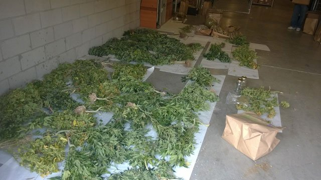 Goodyear police shut down a huge drug operation. (Source: Goodyear Police Department)